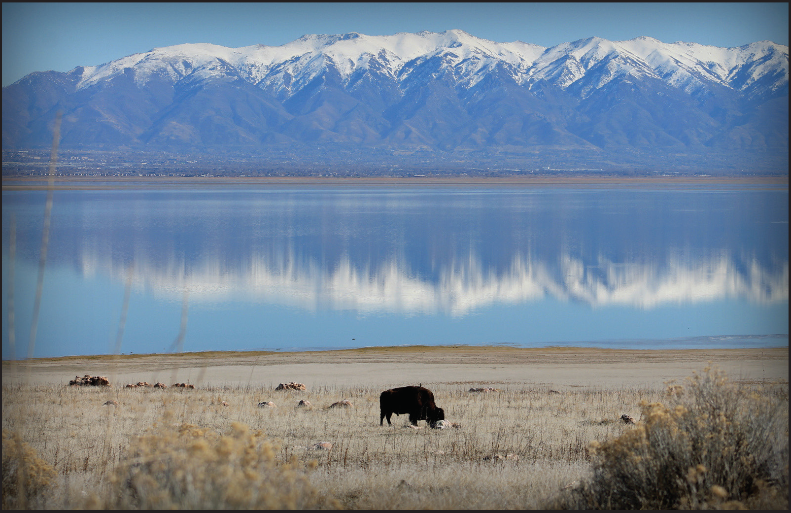 Antelope Island by Justine Johnson