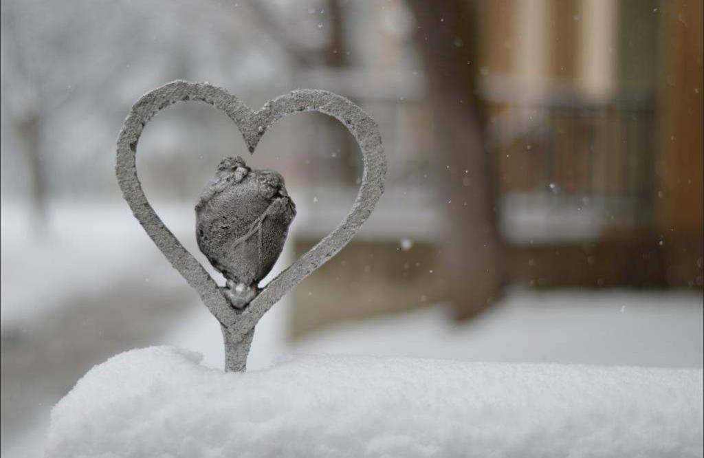 The Heart of Medicine - Scott Potter
